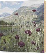 Field Of Flowers In Rural Landscape Wood Print