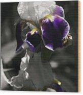 Filoli Iris Wood Print
