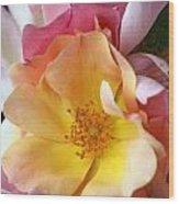 Floral 20 Wood Print
