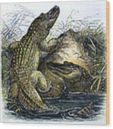 Florida Alligators Wood Print