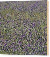 Flower Known As Salvation Jane Wood Print