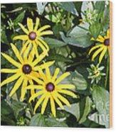 Flower Rudbeckia Fulgida In Full Wood Print by Ted Kinsman