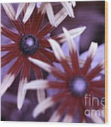Flower Rudbeckia Fulgida In Uv Light Wood Print by Ted Kinsman