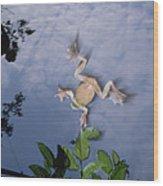 Foam Nest Tree Frog Polypedates Dennysi Wood Print by Mark Moffett