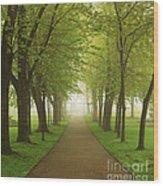 Foggy Park Wood Print