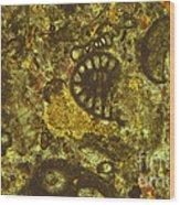 Foraminiferous Limestone Lm Wood Print