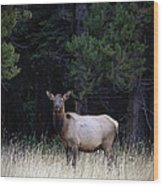 Forest Elk Wood Print