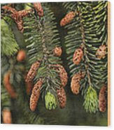 Forest Treasures Wood Print by Bonnie Bruno