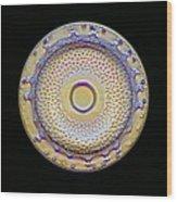 Fossil Diatom, Light Micrograph Wood Print