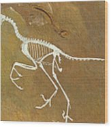 Fossil Of Archaeopterix, One Of The First Birds Wood Print