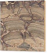 Fossil Stromatolite Wood Print