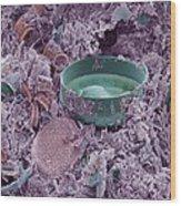 Fossilised Diatoms, Sem Wood Print
