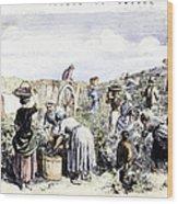France: Grape Harvest, 1854 Wood Print by Granger