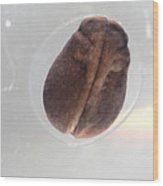 Frog Egg Development Wood Print