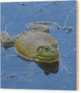 Frog In Pond Wood Print