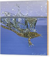 Frog Jumps Into Water Wood Print by Ted Kinsman