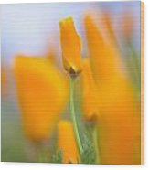 Furled Poppy Wood Print