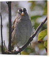 Gambel's White Crowned Sparrow Wood Print