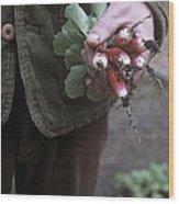 Gardener Holding Freshly Picked Radishes Wood Print