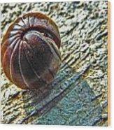 Giant Pill Bug Wood Print
