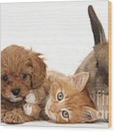 Ginger Kitten With Cavapoo Pup Wood Print