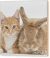 Ginger Kitten With Sandy Lionhead-cross Wood Print