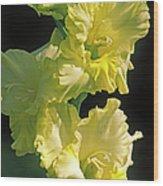 Gladiolus (gladiolus X Gandavensis) Wood Print