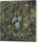 Glaucous-winged Gull Nest With Three Wood Print