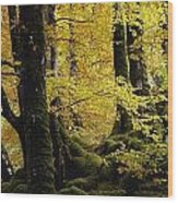 Glenveagh National Park, County Wood Print