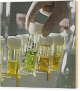 Gloved Hands Selecting A Vial For Analysis Wood Print