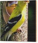 Golden Finch Wood Print