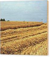 Golden Harvest Field 1 Wood Print