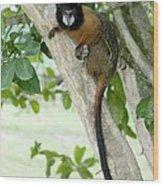 Golden-mantled Tamarin Wood Print