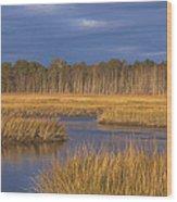 Golden Marsh Wood Print