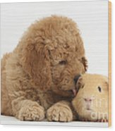 Goldendoodle Puppy And Guinea Pig Wood Print