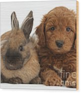 Goldendoodle Puppy And Rabbit Wood Print