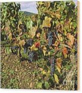 Grapes Growing On Vine Wood Print