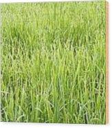 Grasses Wood Print