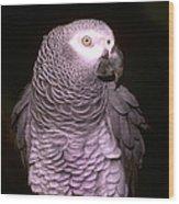 Gray Parrot Wood Print