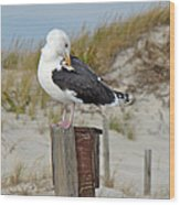 Great Black-backed Gull    Larus Marinus Wood Print