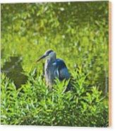 Great Blue Heron Hiding Wood Print