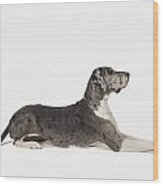 Great Dane Dog Wood Print