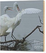 Great Egret Pair Wood Print