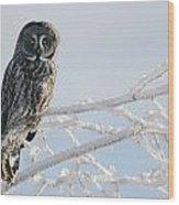 Great Grey Owl, Northern British Wood Print