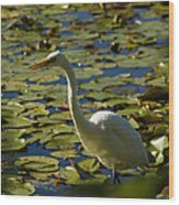 Great White Egret Perched On A Rock Wood Print