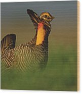 Greater Prairie Chicken Male Wood Print by Tim Fitzharris