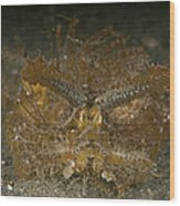 Green Ambon Scorpionfish, North Wood Print