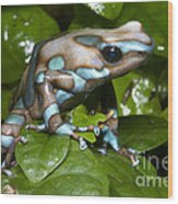Green And Black Poison Frog Wood Print