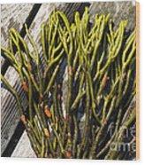 Green Fleece Seaweed Wood Print
