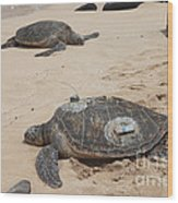 Green Sea Turtles With Gps Wood Print